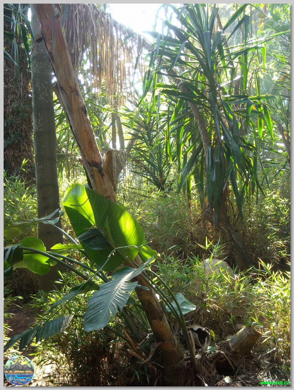 Les jardins exotiques de sidi bouknadel for Jardin exotique